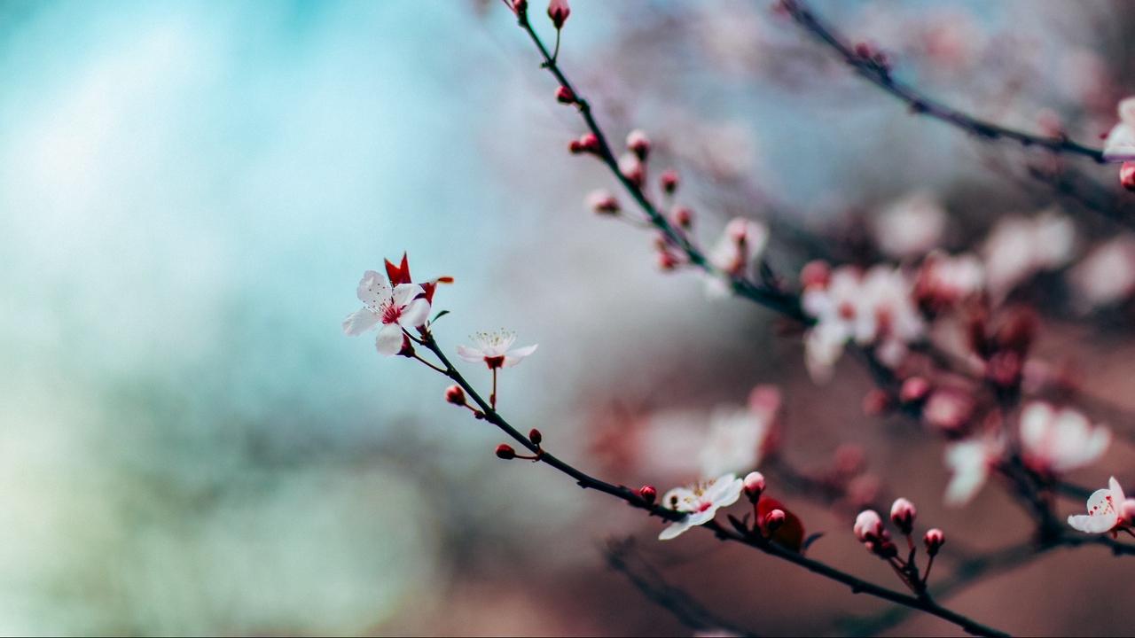 Приласкала весна